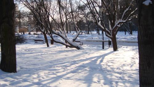Skwer WIECHA podczas krótkiej zimy